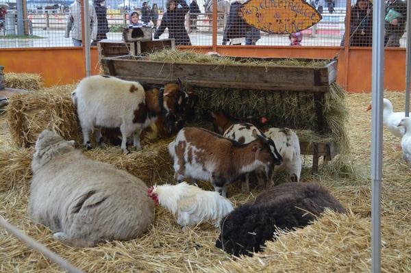 Domaine du blaye cheval passion avignon - Salon animaux avignon ...